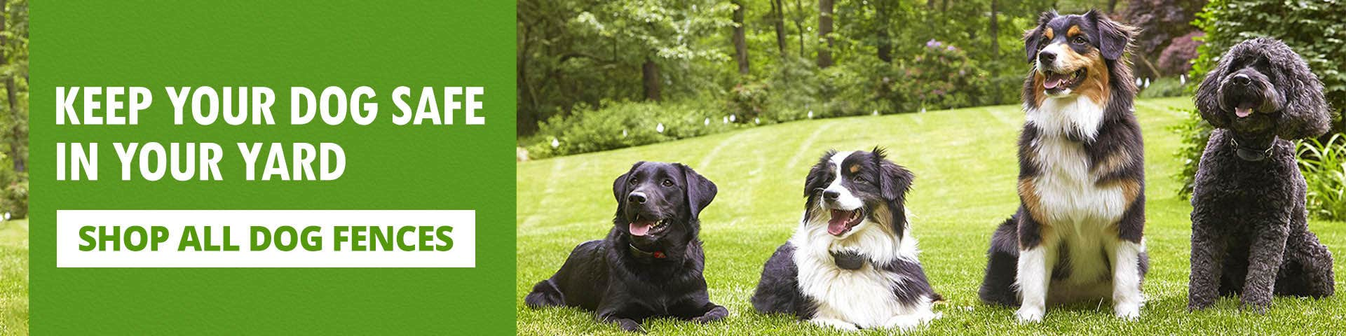 Keep your dog safe in your yard