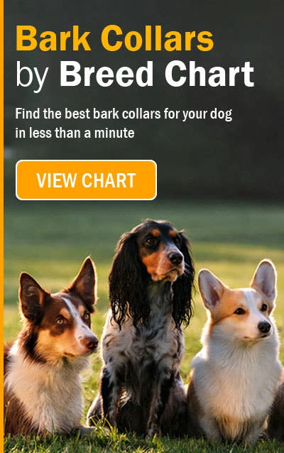 The bark collar buying guide