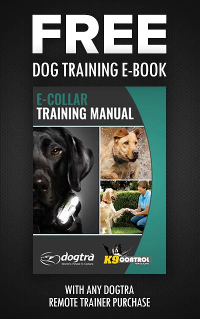 Learn how to train your dog with your remote training