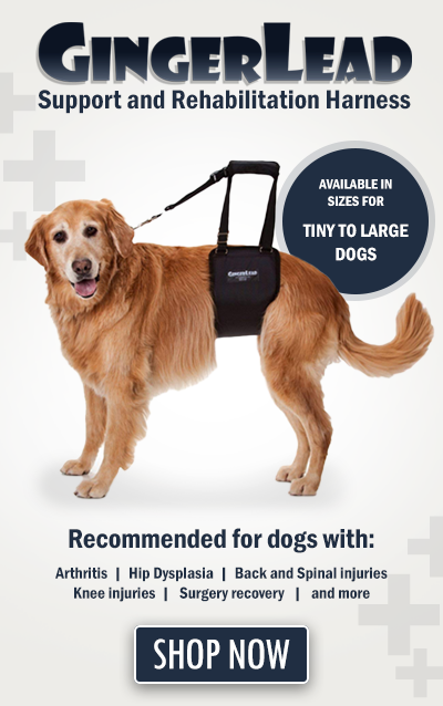 For dogs that need assistance with mobility