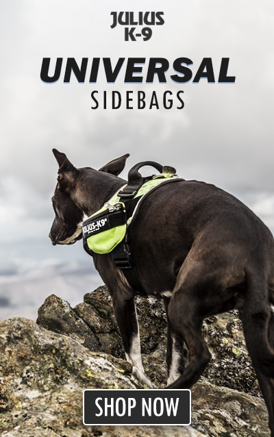 Dog on mountain wearing Julius K9 Powerharness and Universal Sidebags