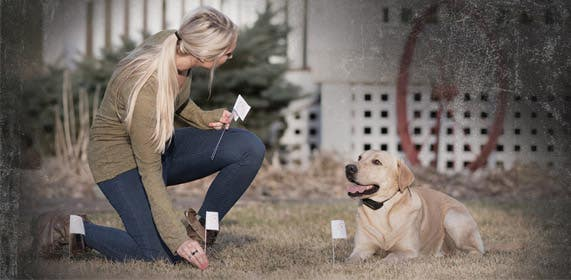 Electric Dog Fences Containment Hidden NZ